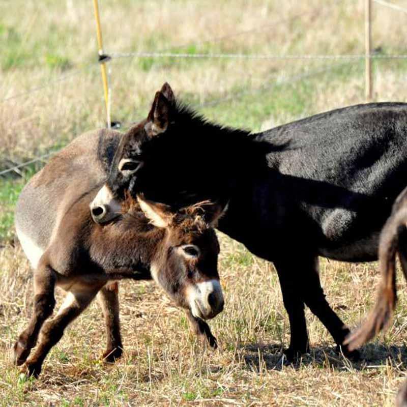Besoins de l'âne copains