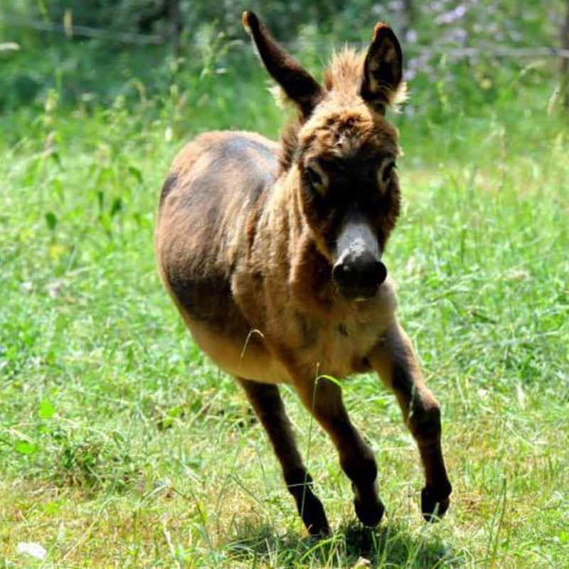 Besoins de l'âne courir