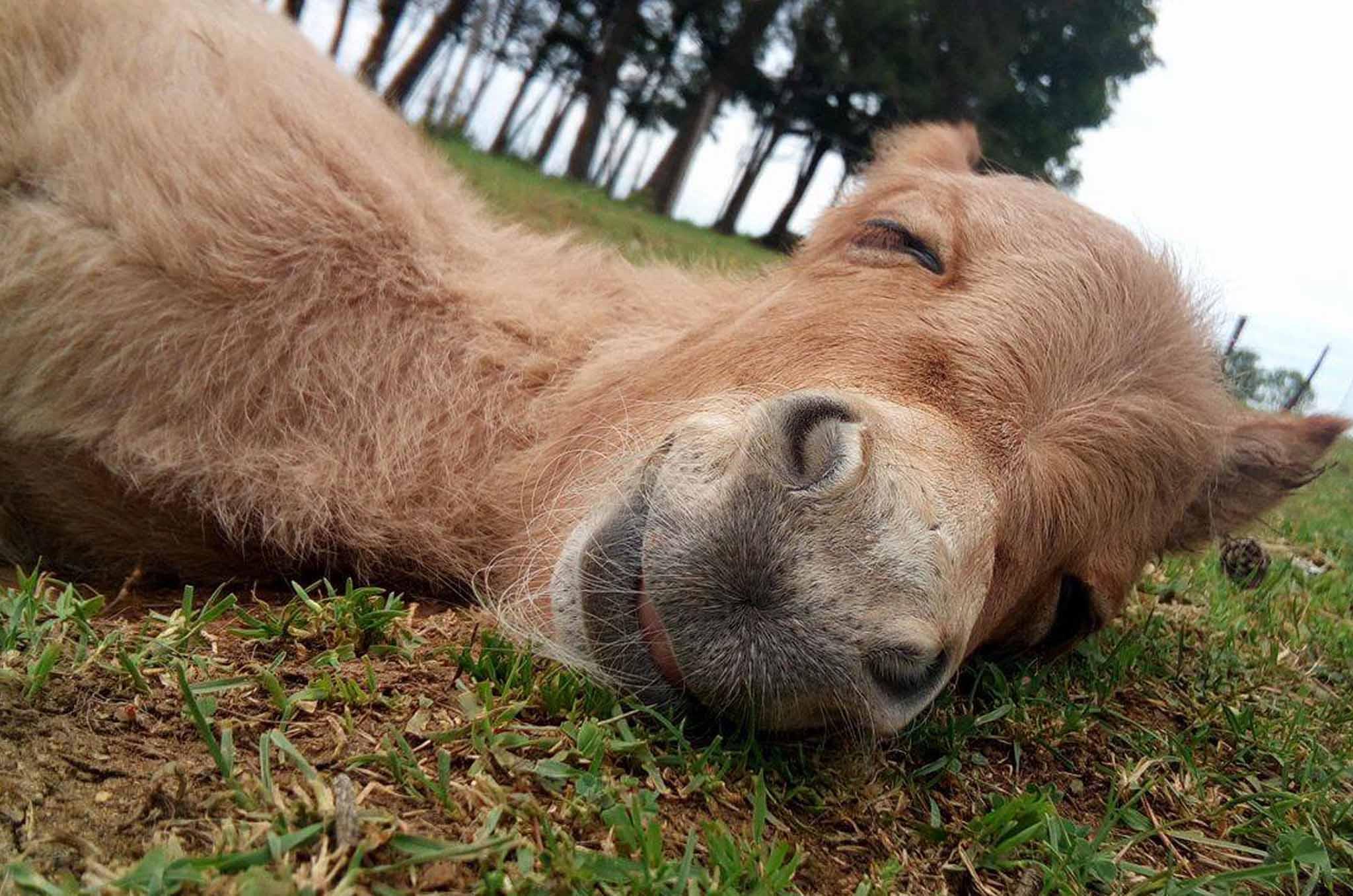 prix d'un âne dormir