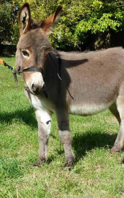 Naissances de bébés ânes fiesta
