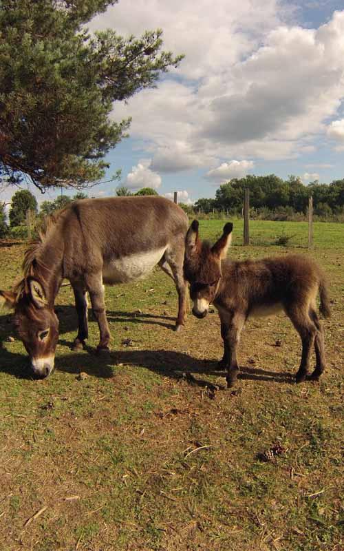 Naissances de bébés ânes flower