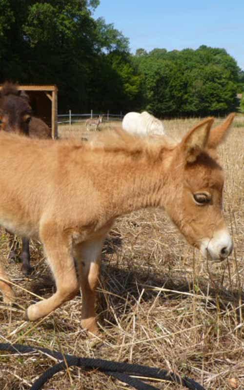 Naissances de bébés ânes funny