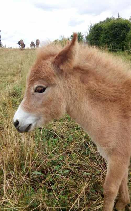 Naissances de bébés ânes hindi
