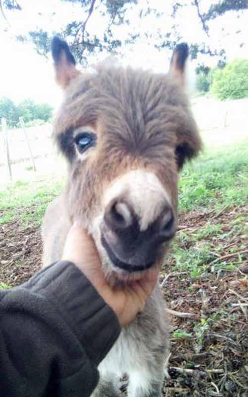 Naissances de bébés ânes hookah