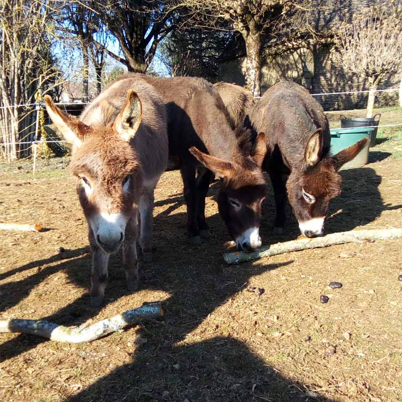 Besoins de l'âne manger