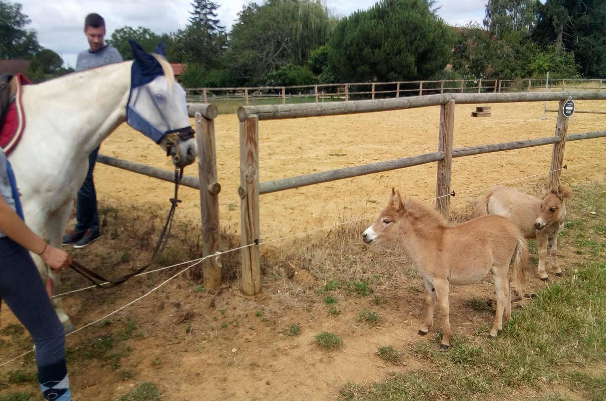 âne miniature regarde cheval