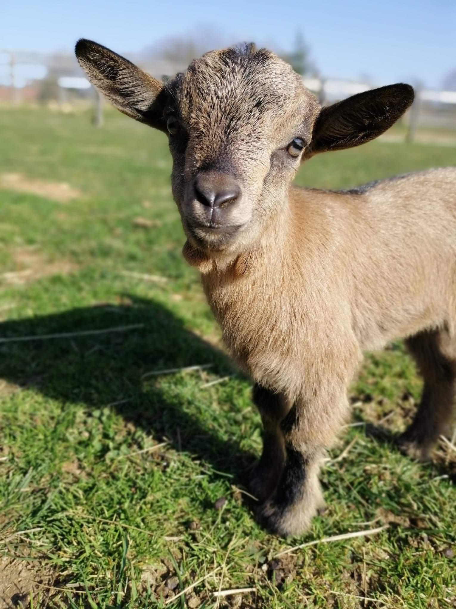 Naissances de bébés ânes idyle